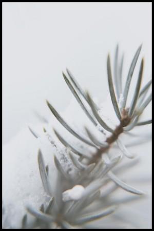 Botanisk